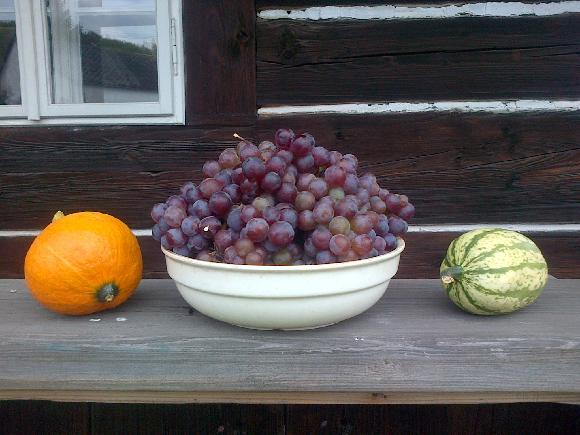 Sklizeň a radostný podzim