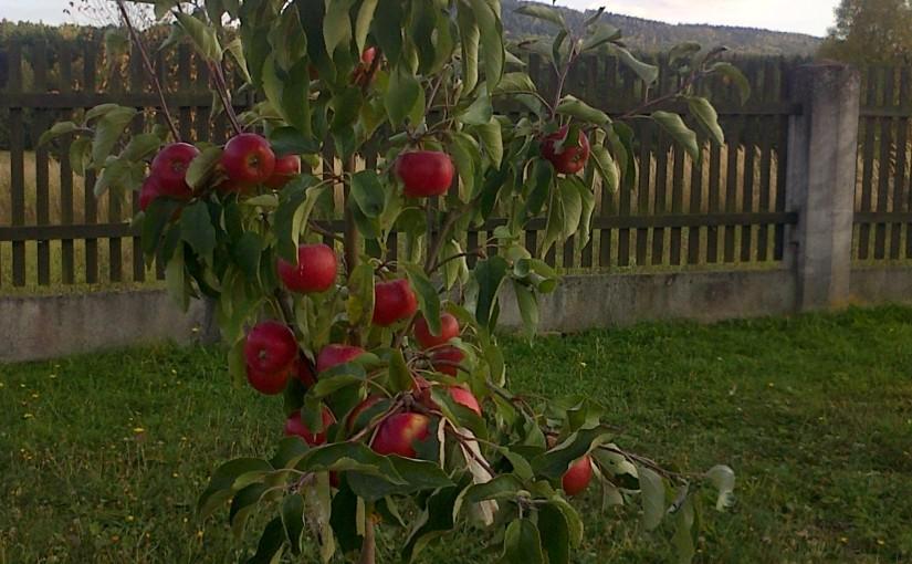 Jablíčka od Seleny