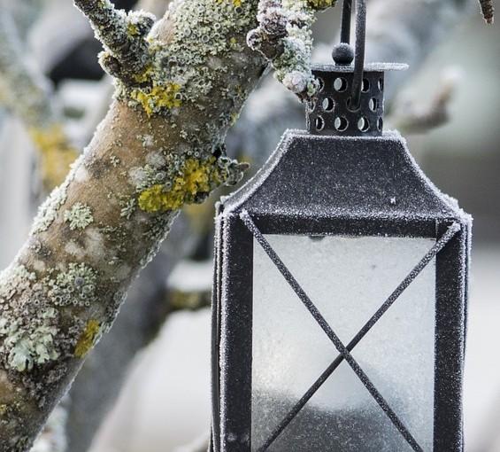 Leden: Zahradník sní o zahradě sen