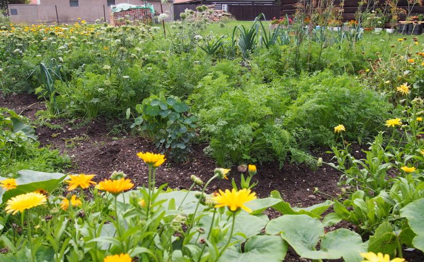 Inspirativní, kreativní a intuitivní pěstování zeleniny