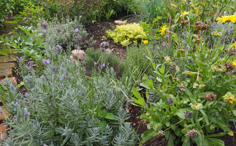 Péče o bylinky a jejich sklizeň v průběhu jara