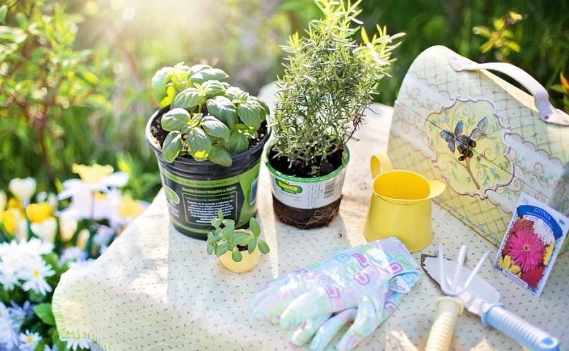 5 bylinek pro pěstování doma v truhlíku