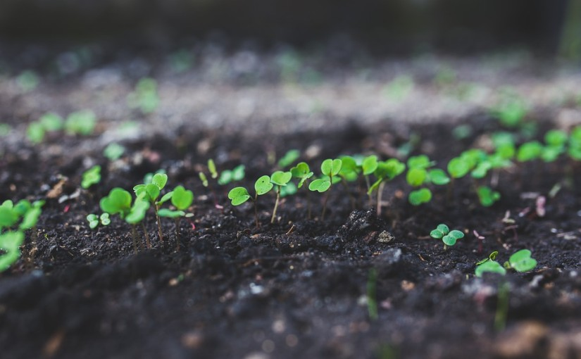 Jak vypěstovat dobrou rukolu