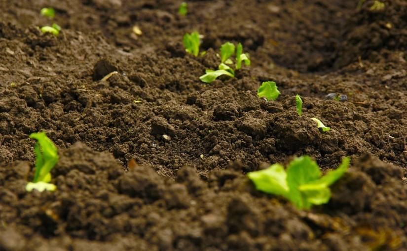 Jak se zbavit plevelu a co s ním?
