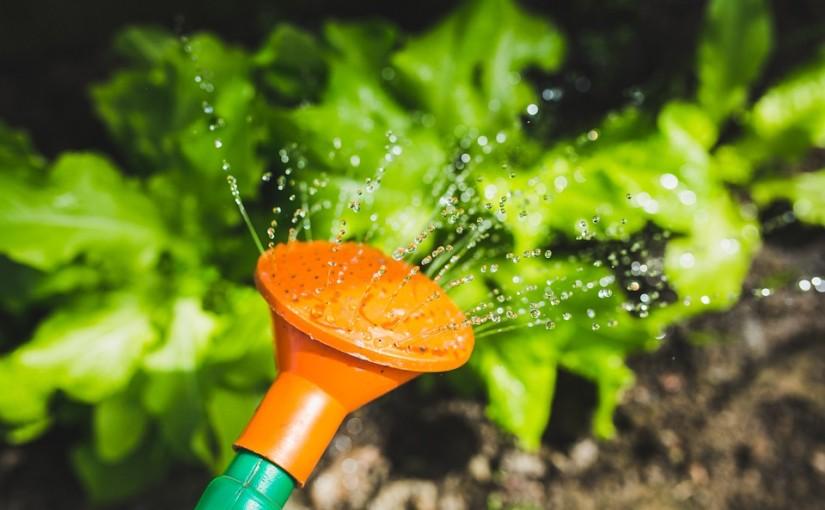 Závlaha zahrady: Jak chytat dešťovou vodu?