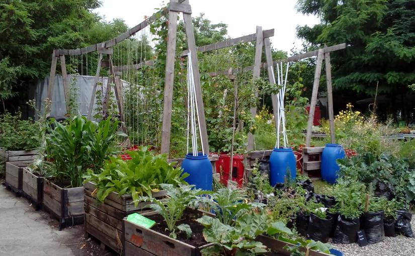 REPORTÁŽ: Nomádská komunitní zahrada v Berlíně