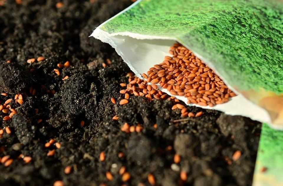 seeds-1302793_960_720