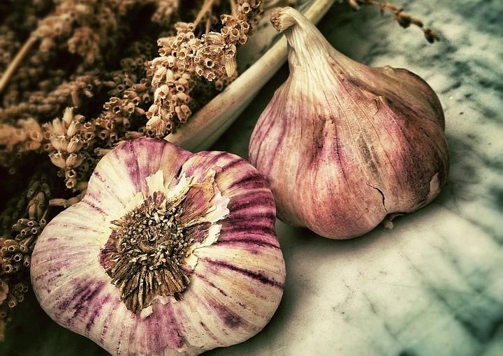 Kdy vysadit česnek, abyste měli bohatou sklizeň?