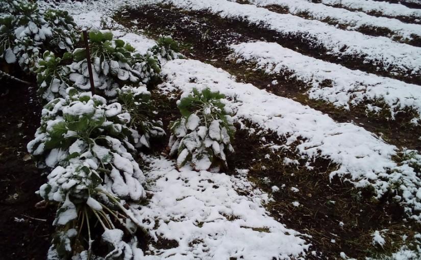 Sníh slétl na zem na Martina. Díkybohu