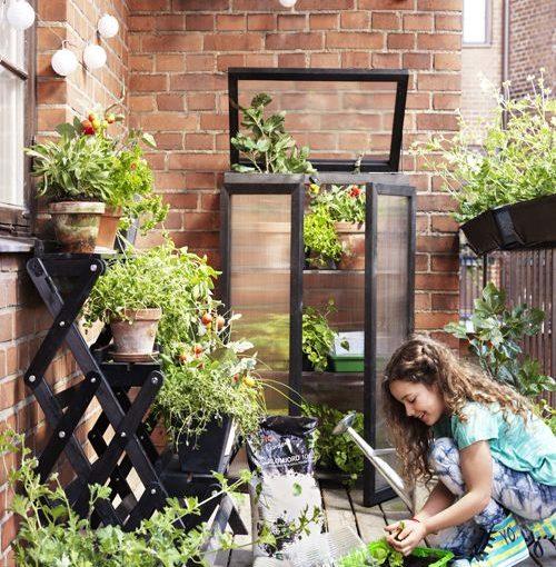 Proměňte svůj balkon v jedlou zahradu. Sklízejte saláty i rajčata