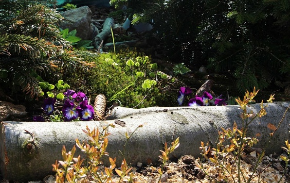 Blogerka a zahradnice Jitka Daňková si  svoji zahradu vysnila