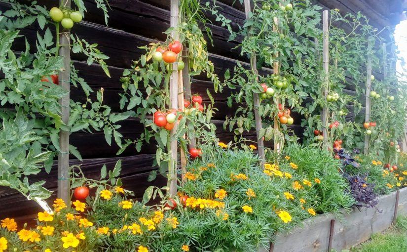 Zas o kus víc věřím ve společné pěstování zeleniny, květin a bylin