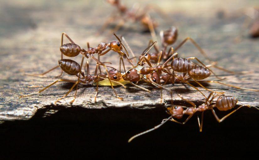 Trápí vás mravenci na zahradě? Zkuste skořici nebo kávu