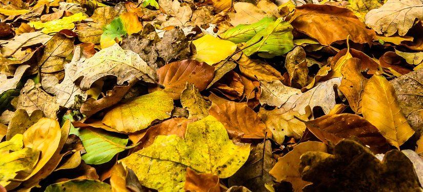 Haldy shrabaného listí? Přikryjte s ním záhony
