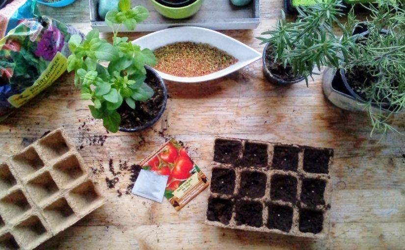 Jak předpěstovat rajčata? Tady je návod krok za krokem