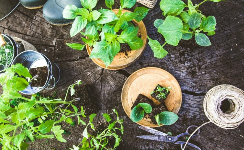 Průvodce na zahrádku: Jak vysévat a vysazovat zeleninu?