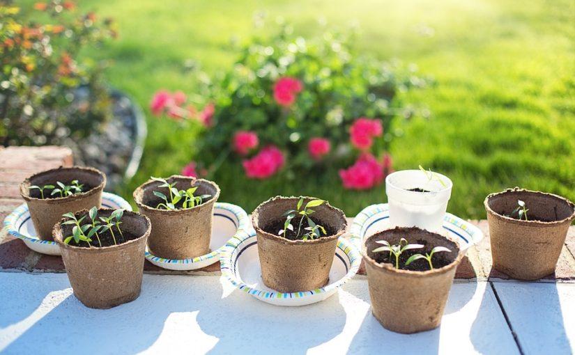 Jak naklíčit semínka? Máčejte je v bylinkovém odvaru