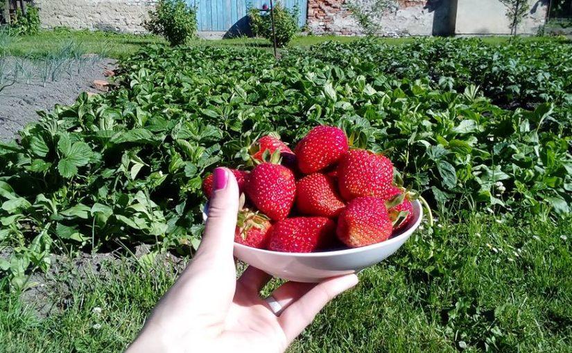 Červen na zahradě: Miska jahod a výsev zimní zeleniny