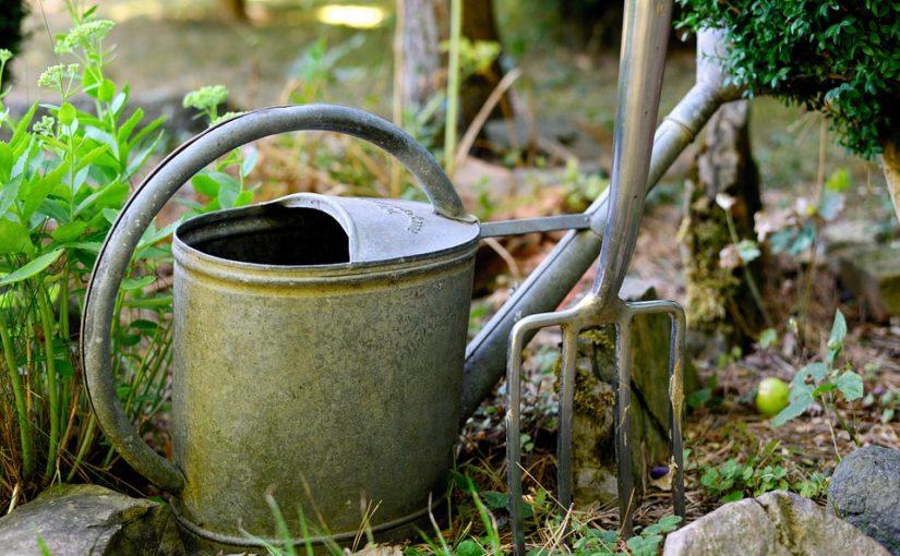 Záhony po sklizni chtějí hnůj nebo zelené hnojení
