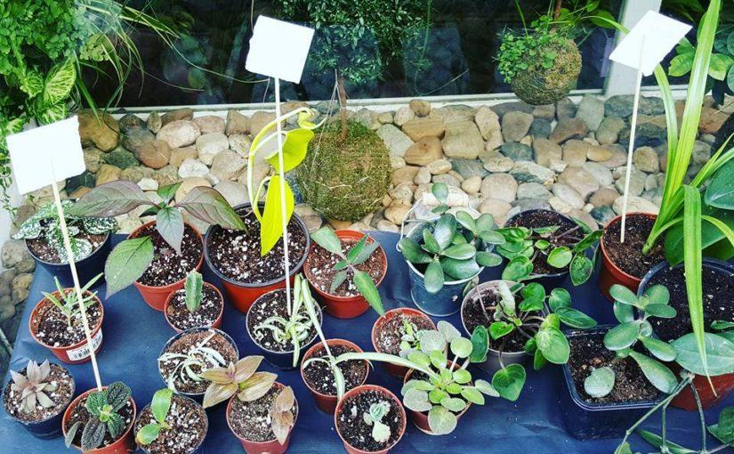 Zahrada na niti pořádá první letošní Rostlinnou štafetu